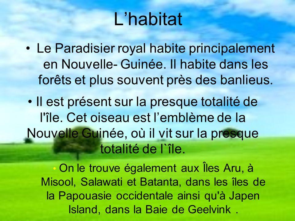 L'habitat Le Paradisier royal habite principalement en Nouvelle- Guinée. Il habite dans les forêts et plus souvent près des banlieus.