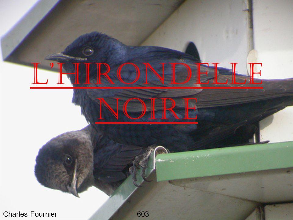 L'HIRONDELLE NOIRE Charles Fournier 603