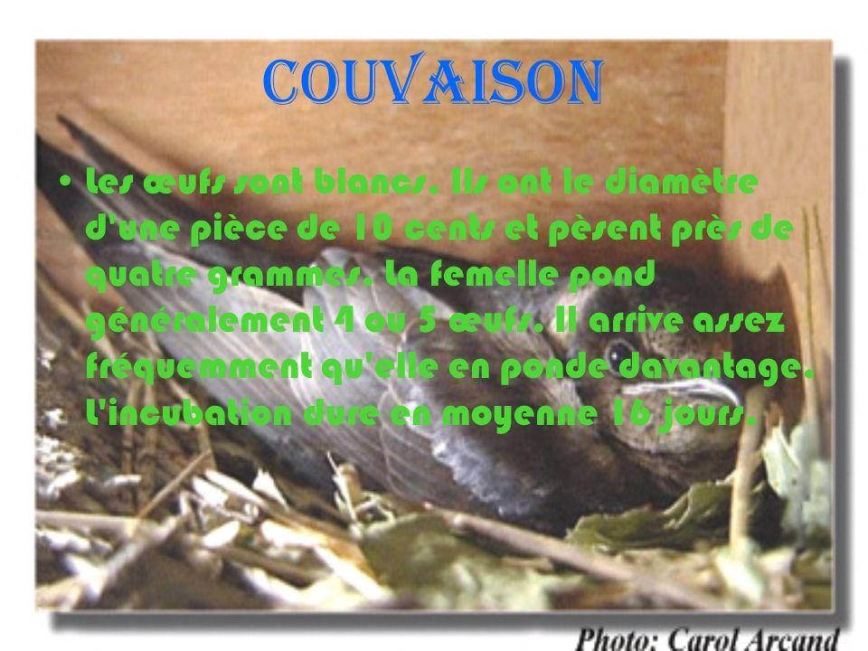 Couvaison