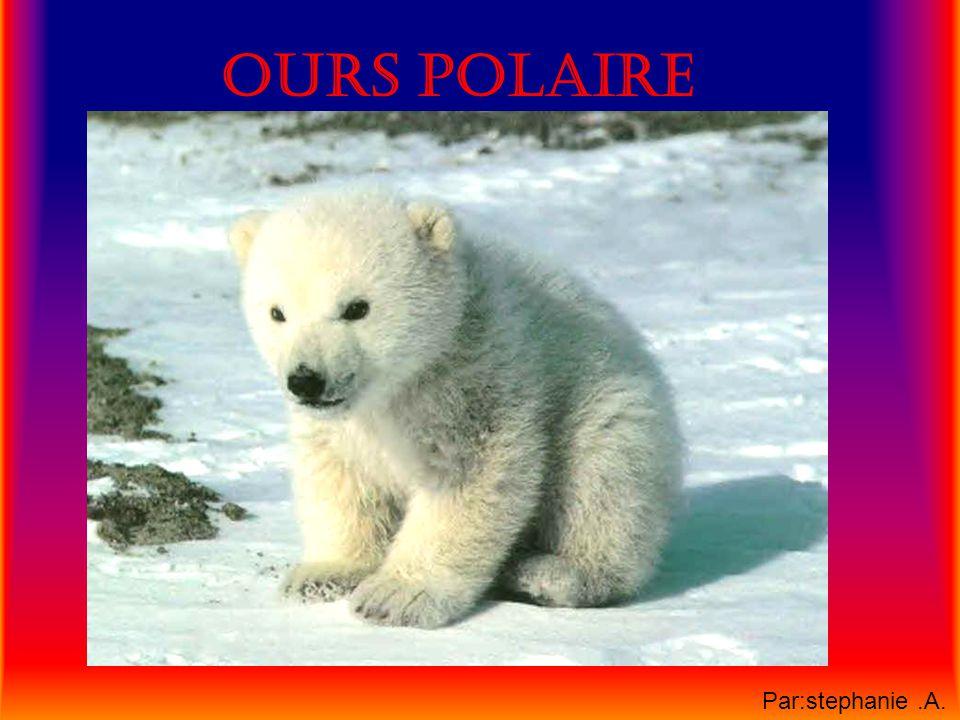 Ours polaire Par:stephanie .A.