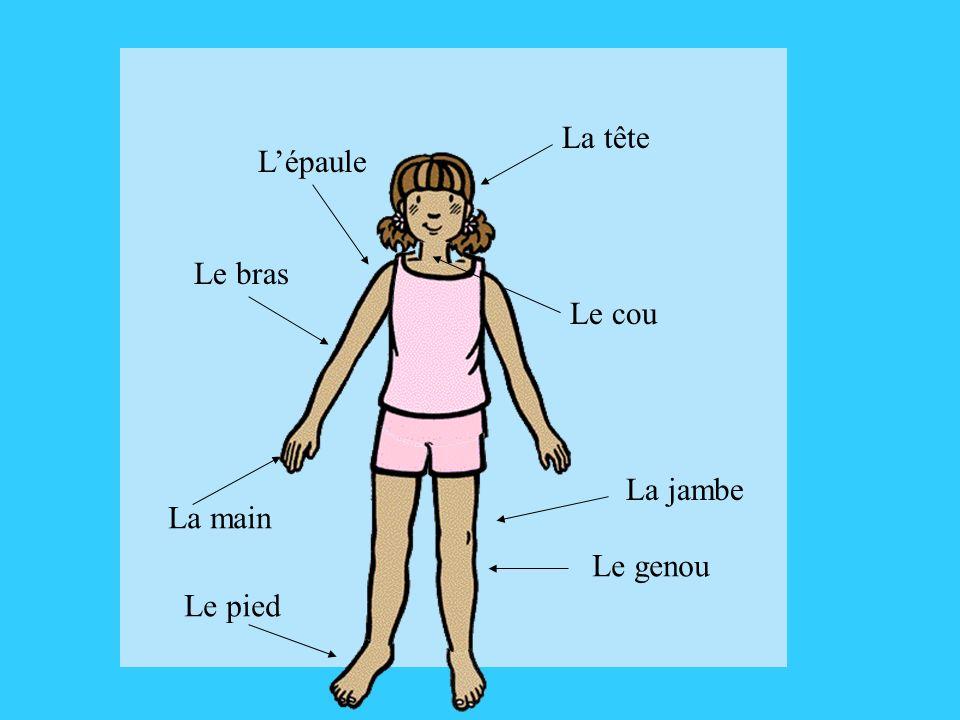 La tête L'épaule Le bras Le cou La jambe La main Le genou Le pied
