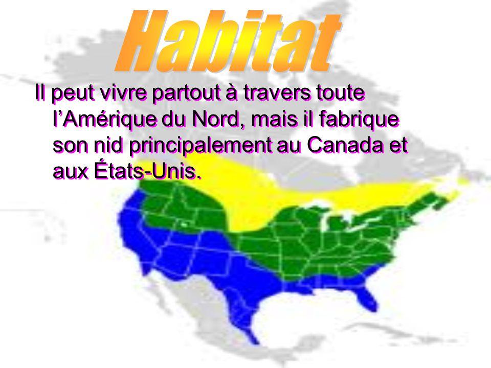 Habitat Il peut vivre partout à travers toute l'Amérique du Nord, mais il fabrique son nid principalement au Canada et aux États-Unis.