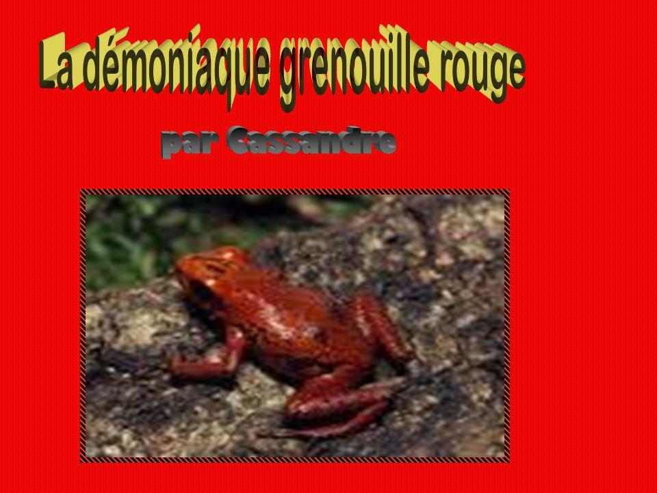 La démoniaque grenouille rouge