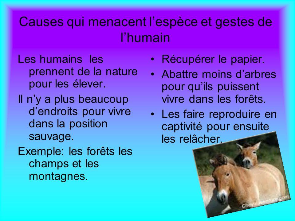 Sos animaux chaque l ve pr sente un animal menac et - Causes des vertiges en position couchee ...