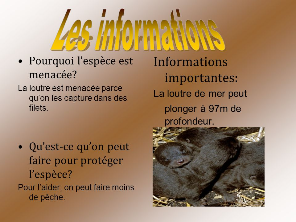Les informations Informations importantes: