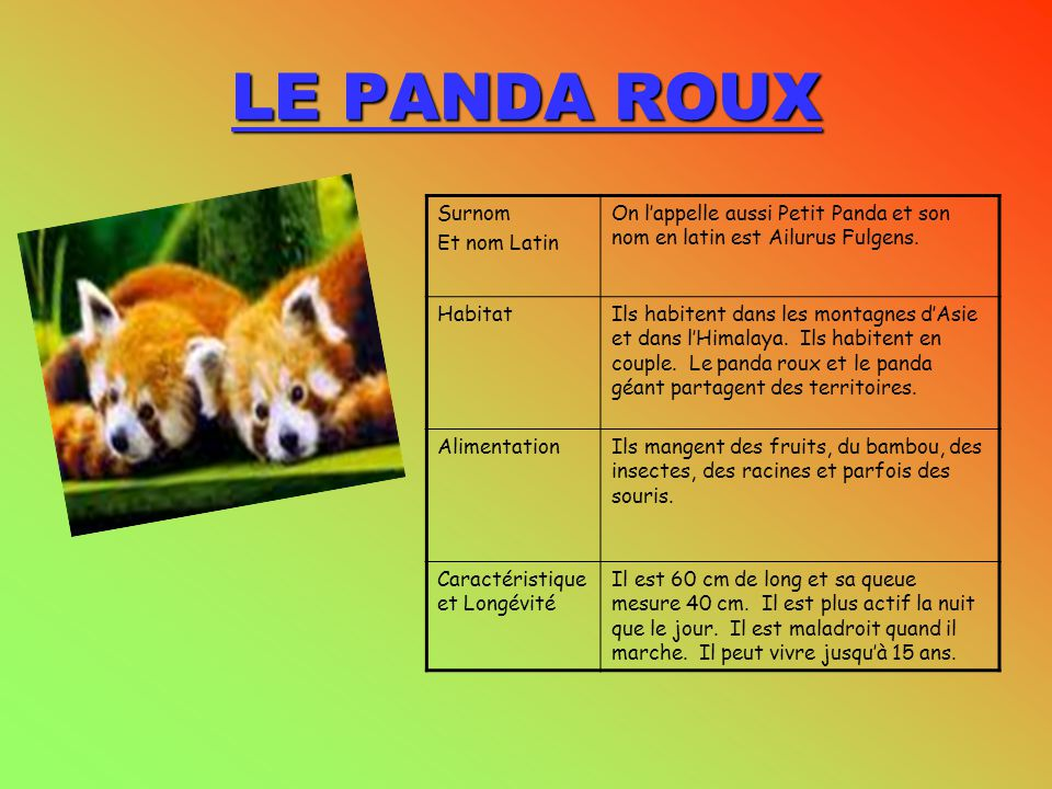 LE PANDA ROUX Surnom Et nom Latin