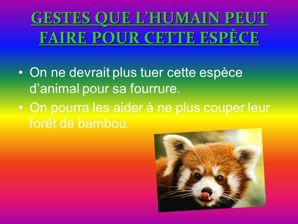 GESTES QUE L'HUMAIN PEUT FAIRE POUR CETTE ESPÈCE