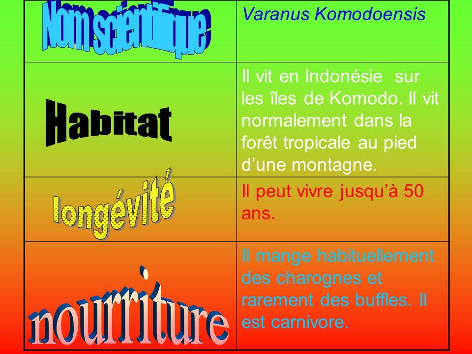 Nom scientifique Varanus Komodoensis