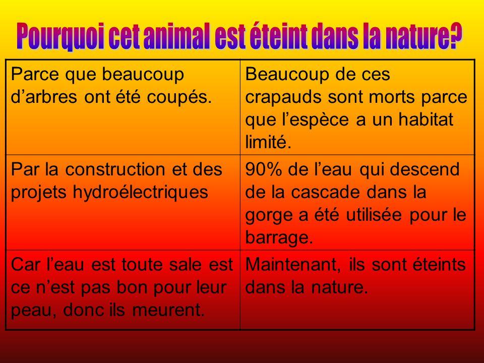 Pourquoi cet animal est éteint dans la nature