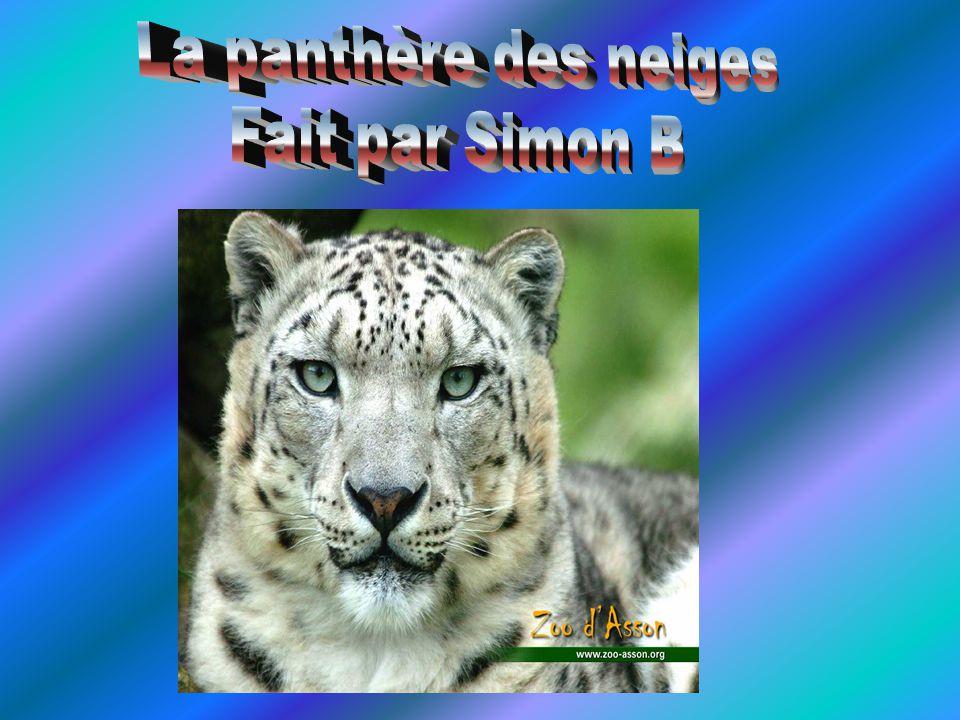 La panthère des neiges Fait par Simon B