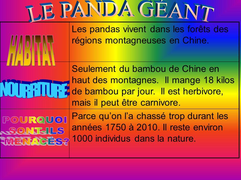 LE PANDA GÉANT HABITAT NOURRITURE POURQUOI SONT-ILS MENACÉS