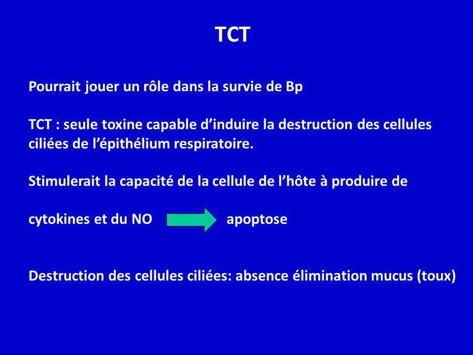 TCT Pourrait jouer un rôle dans la survie de Bp