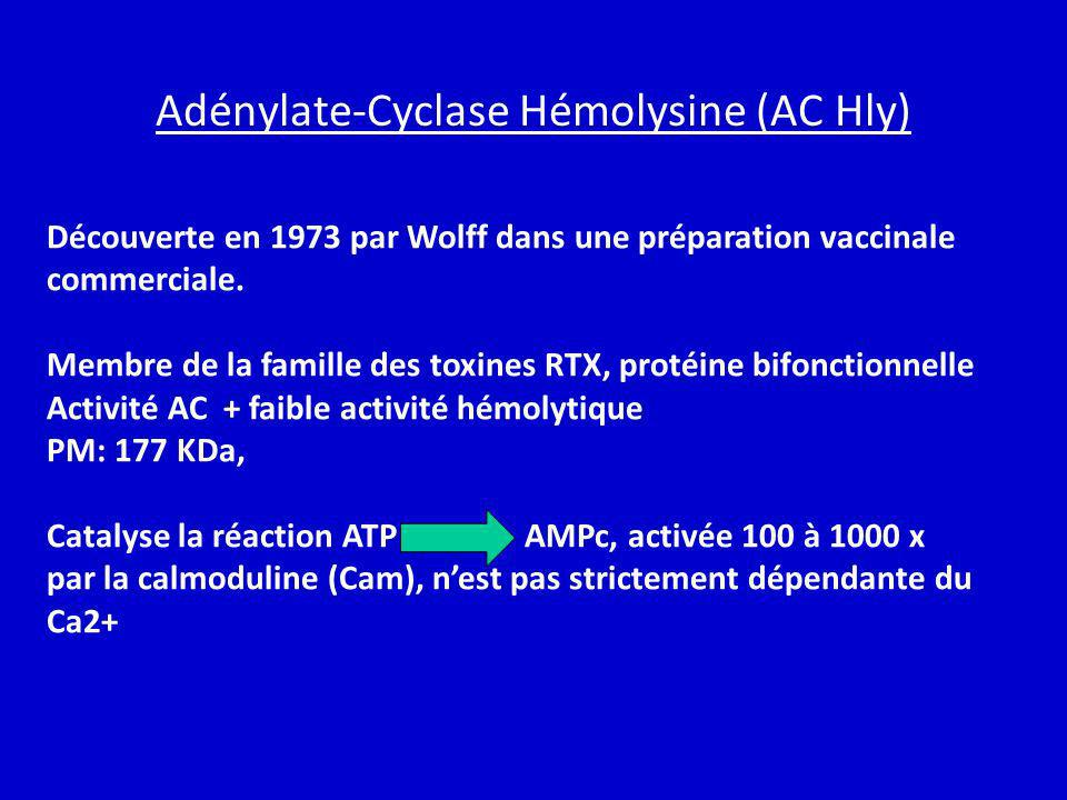 Adénylate-Cyclase Hémolysine (AC Hly)