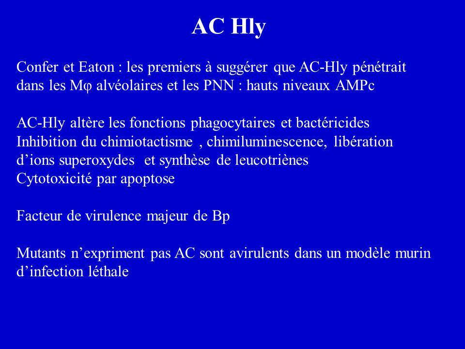 AC Hly Confer et Eaton : les premiers à suggérer que AC-Hly pénétrait dans les Mφ alvéolaires et les PNN : hauts niveaux AMPc.