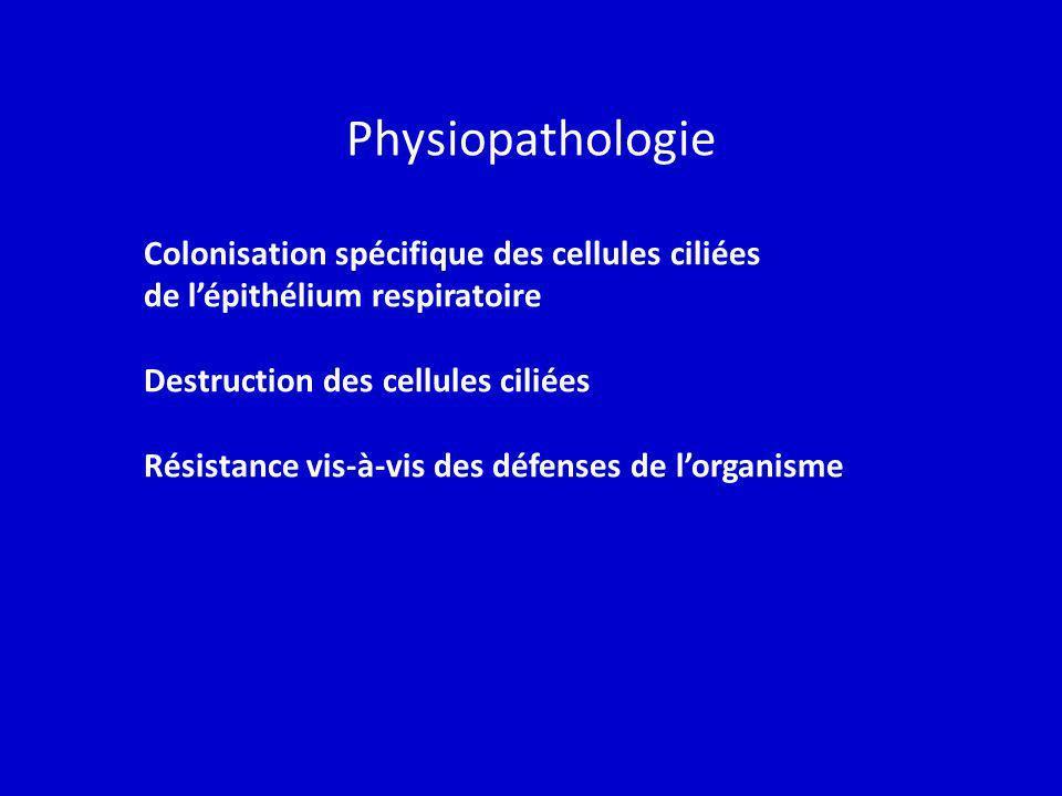 Physiopathologie Colonisation spécifique des cellules ciliées