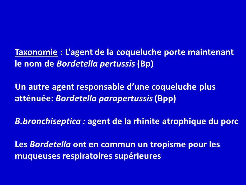 Taxonomie : L'agent de la coqueluche porte maintenant le nom de Bordetella pertussis (Bp)