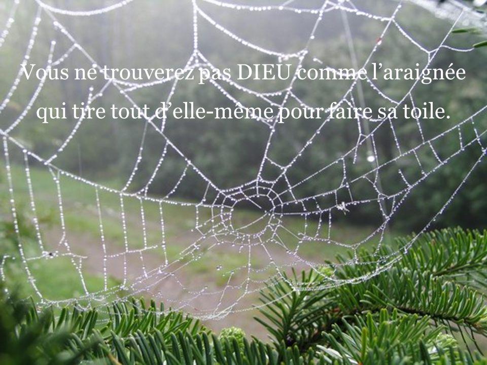Vous ne trouverez pas DIEU comme l'araignée