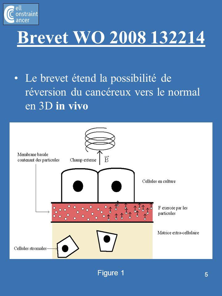 Brevet WO 2008 132214Le brevet étend la possibilité de réversion du cancéreux vers le normal en 3D in vivo.