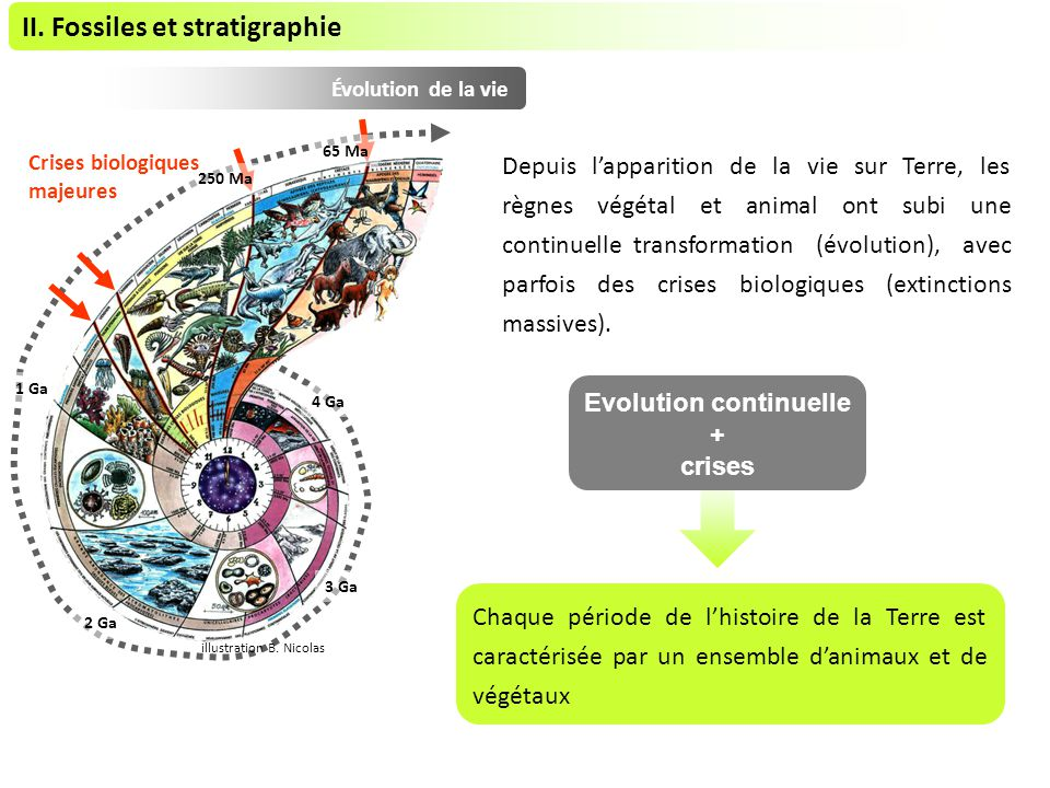 II. Fossiles et stratigraphie