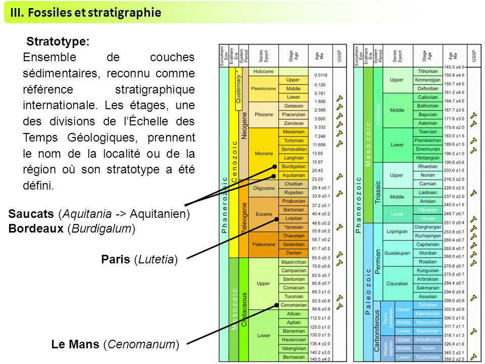 III. Fossiles et stratigraphie