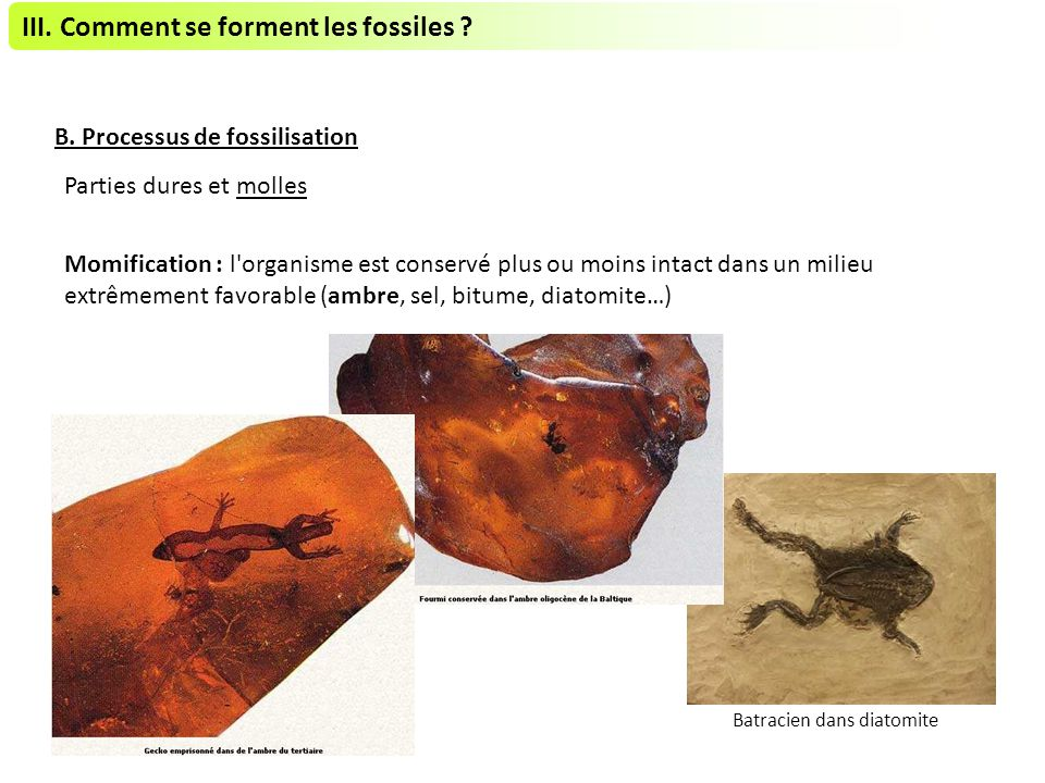 III. Comment se forment les fossiles