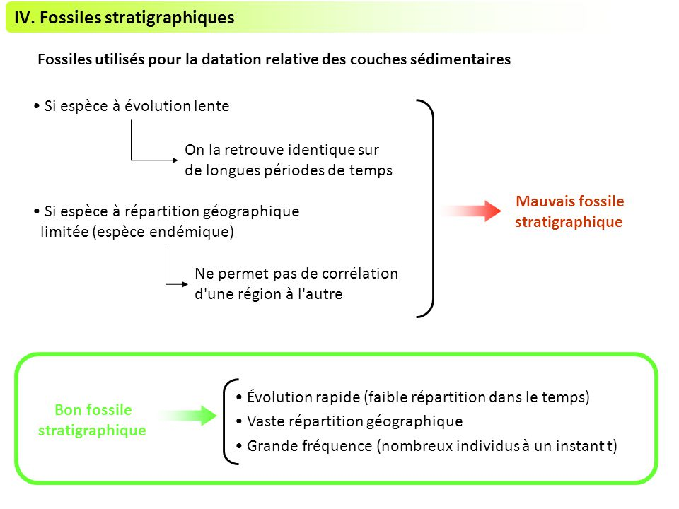 IV. Fossiles stratigraphiques