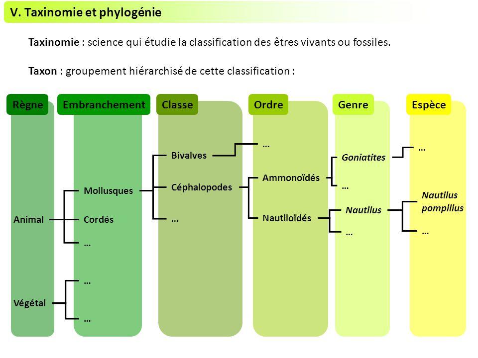 V. Taxinomie et phylogénie