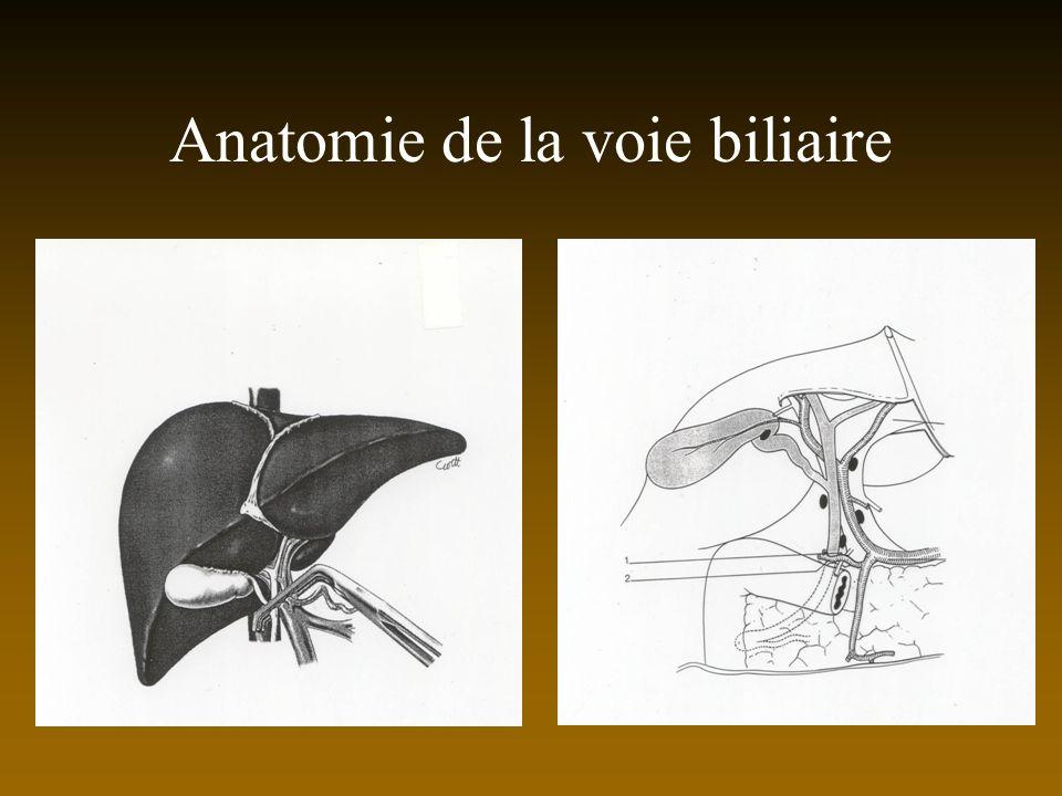 Anatomie de la voie biliaire