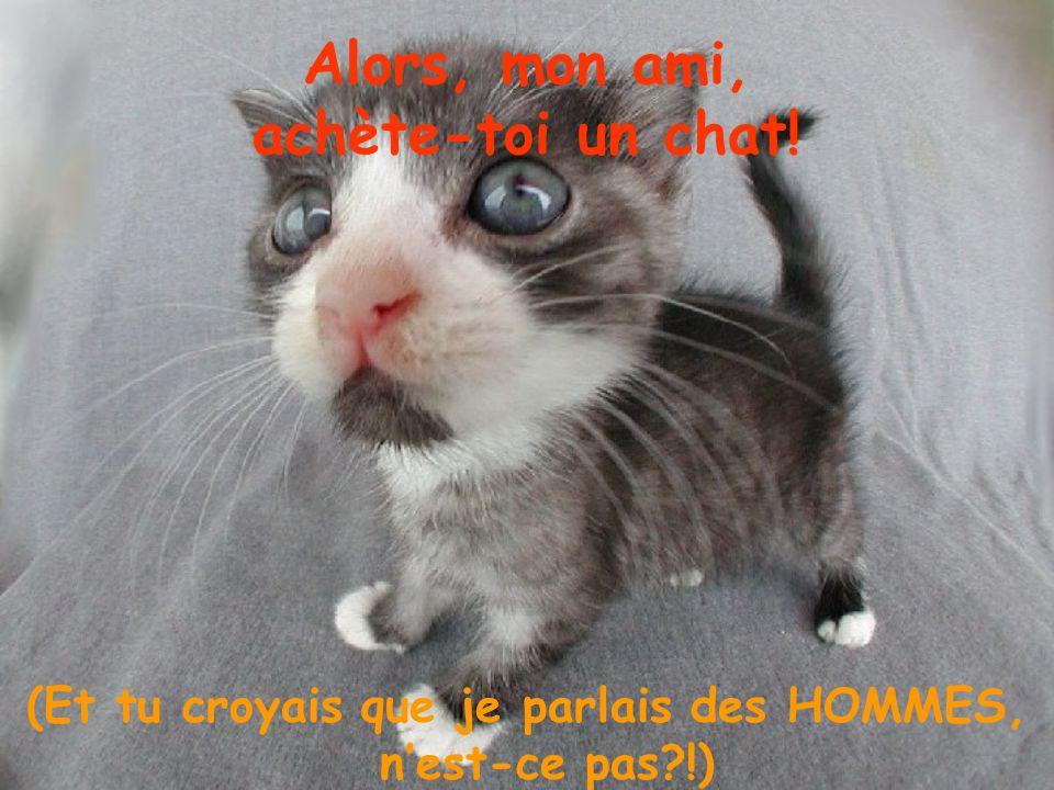 Alors, mon ami, achète-toi un chat!