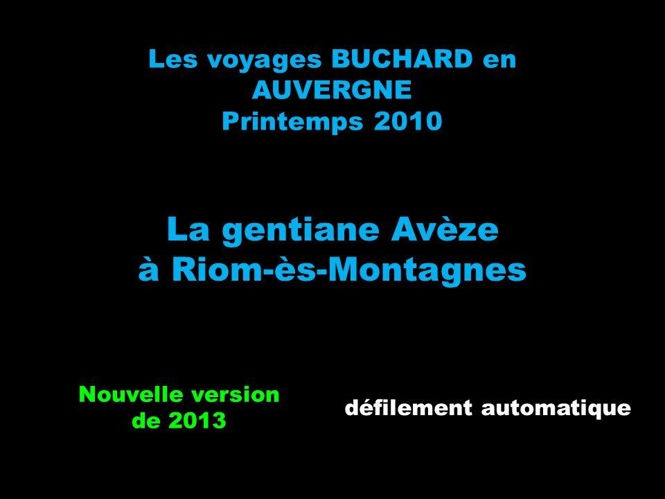 La gentiane Avèze à Riom-ès-Montagnes Les voyages BUCHARD en AUVERGNE