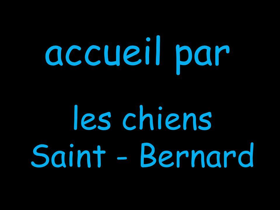 accueil par les chiens Saint - Bernard