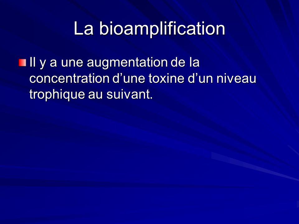 La bioamplificationIl y a une augmentation de la concentration d'une toxine d'un niveau trophique au suivant.