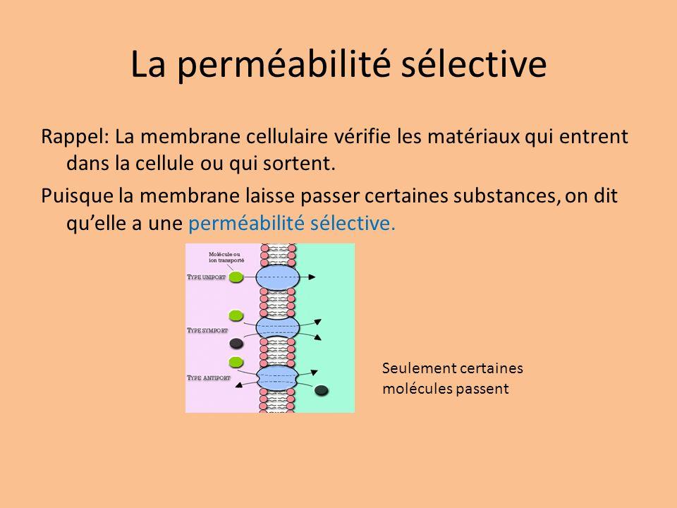La perméabilité sélective