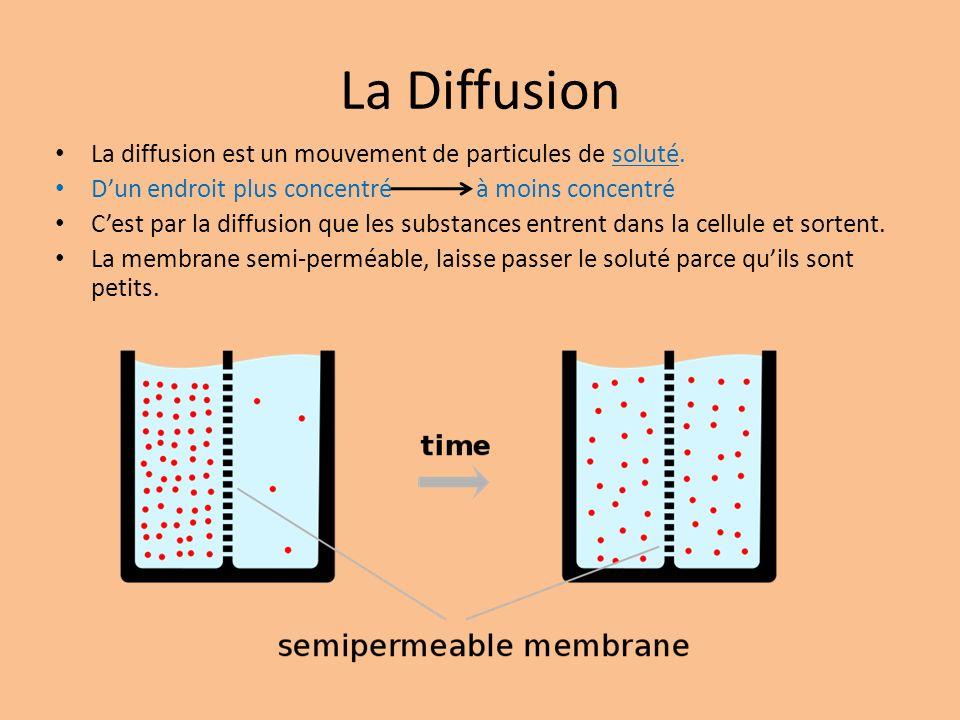 La Diffusion La diffusion est un mouvement de particules de soluté.