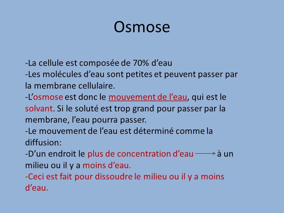 Osmose La cellule est composée de 70% d'eau