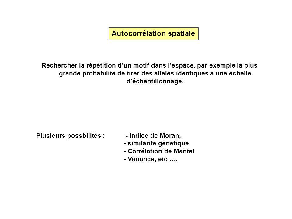 Autocorrélation spatiale