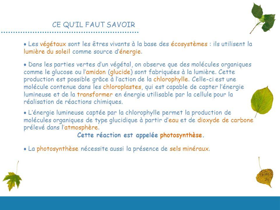 La photosynth se svt 2nde ppt video online t l charger - Comment transformer un coup de soleil en bronzage ...