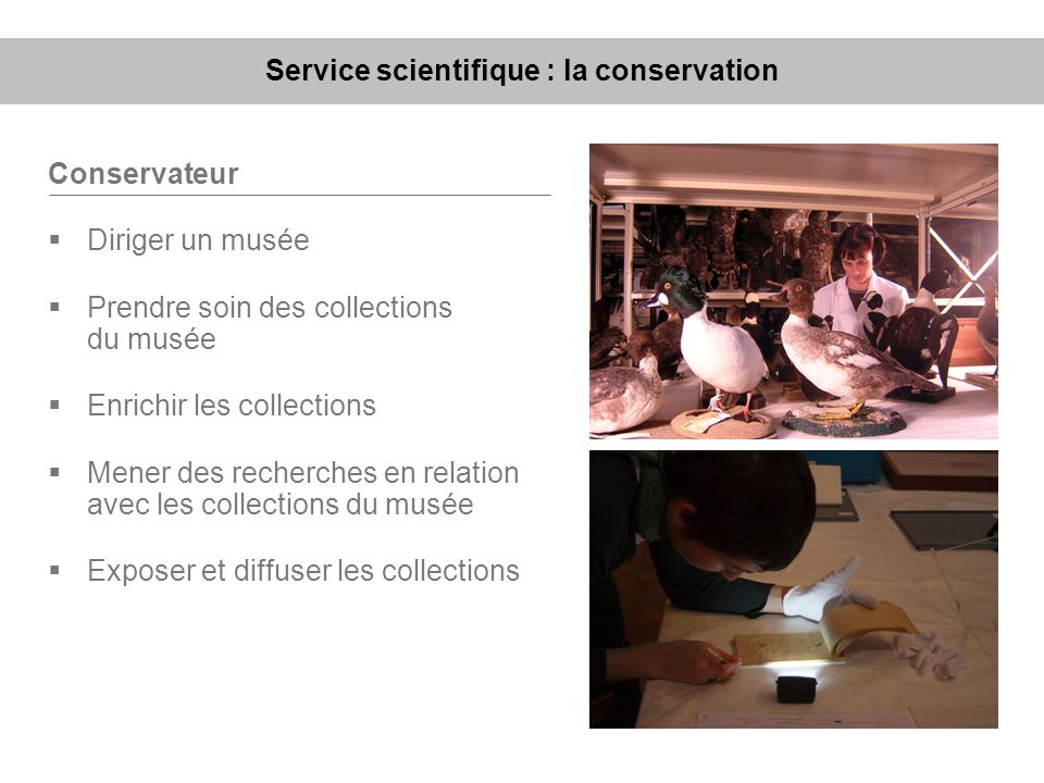 Service scientifique : la conservation