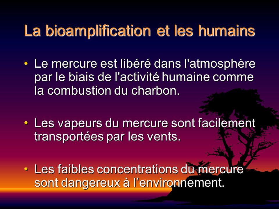La bioamplification et les humains