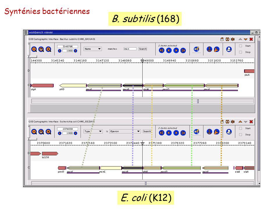 Synténies bactériennes