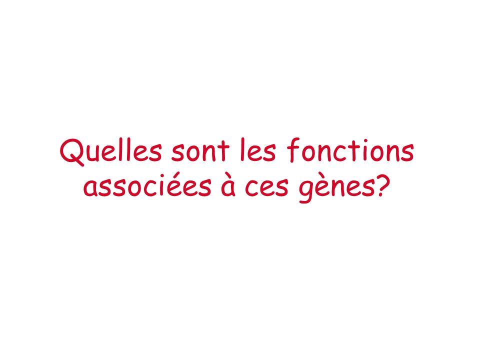 Quelles sont les fonctions associées à ces gènes