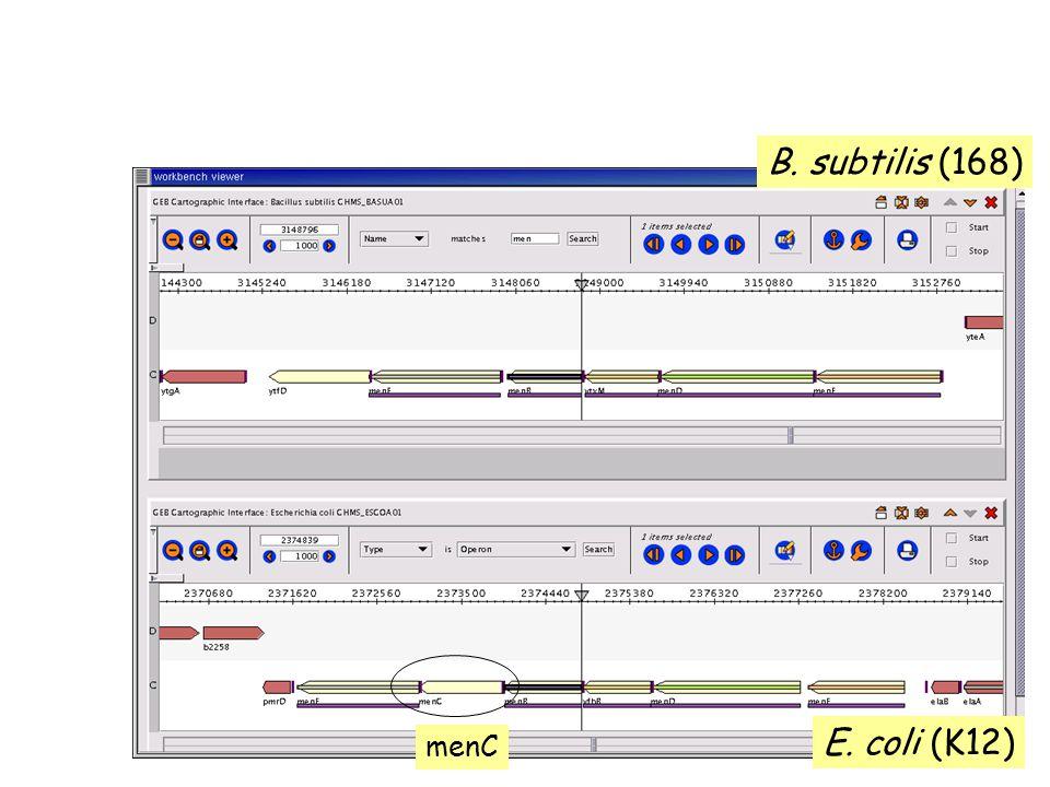 B. subtilis (168) E. coli (K12) menC