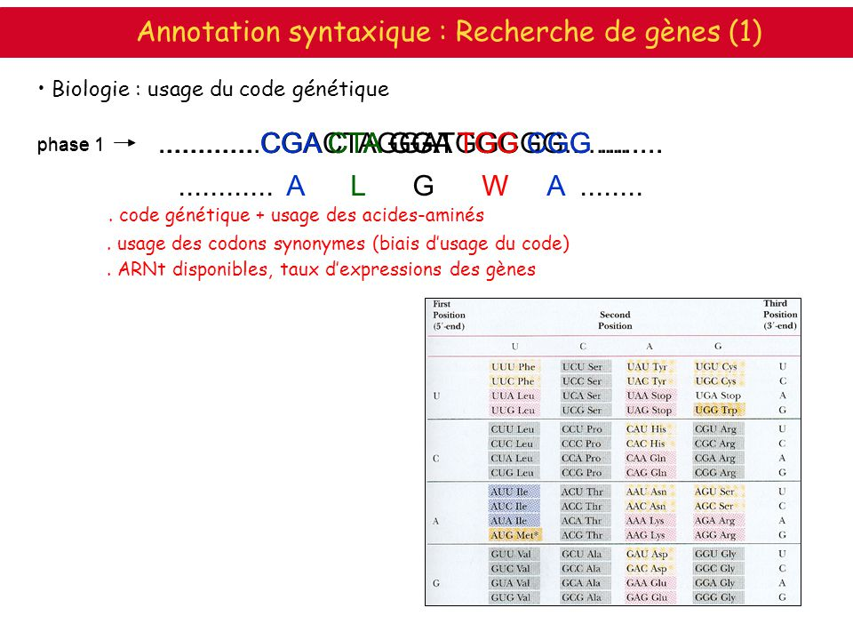 Annotation syntaxique : Recherche de gènes (1)