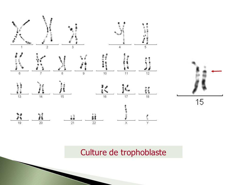 Culture de trophoblaste