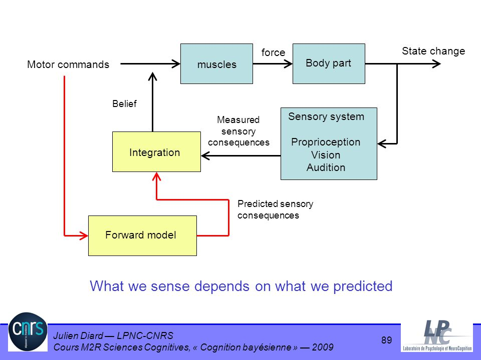 What we sense depends on what we predicted