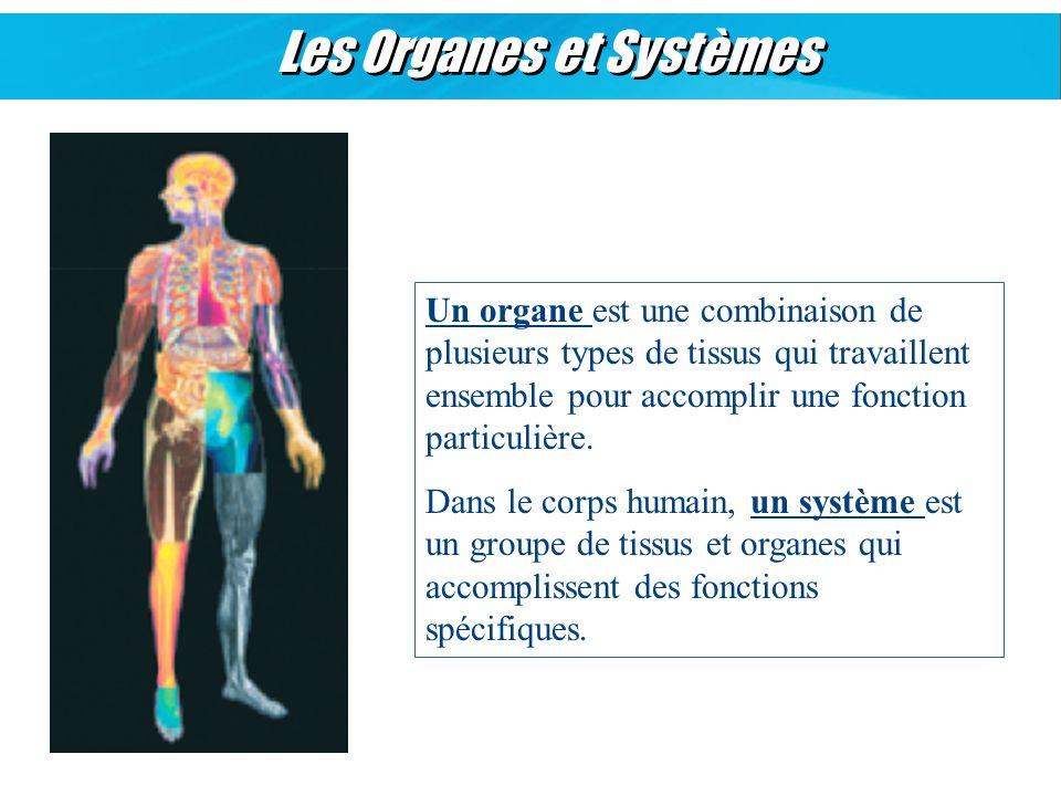 Les Organes et Systèmes