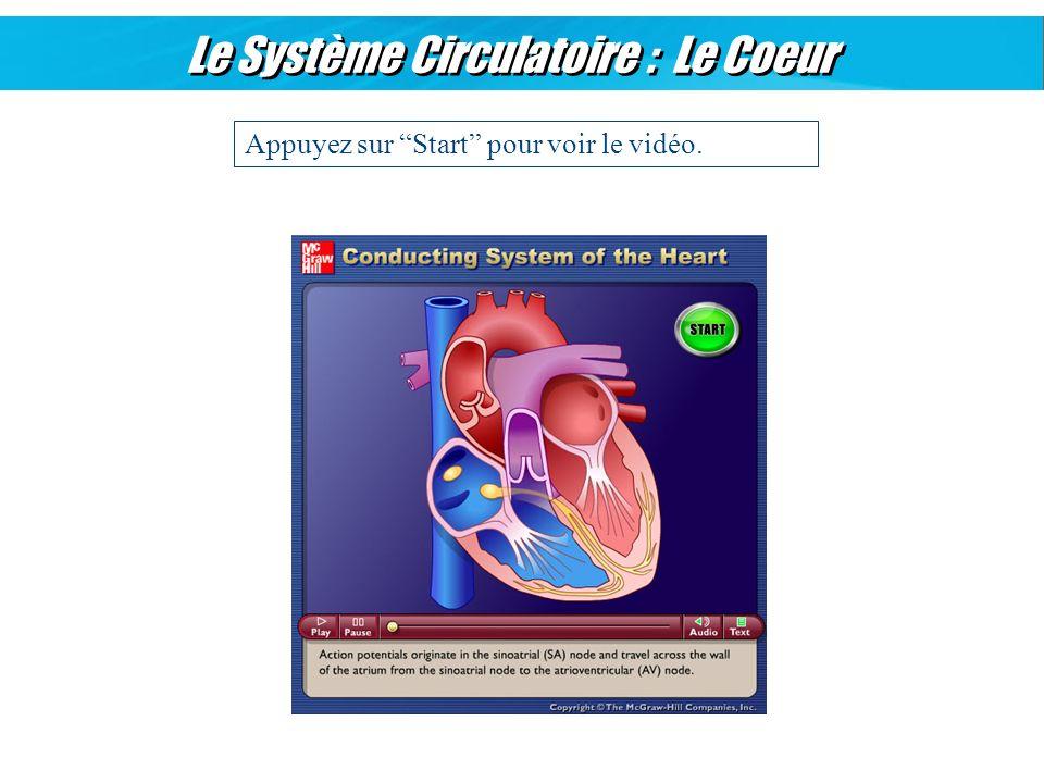 Le Système Circulatoire : Le Coeur