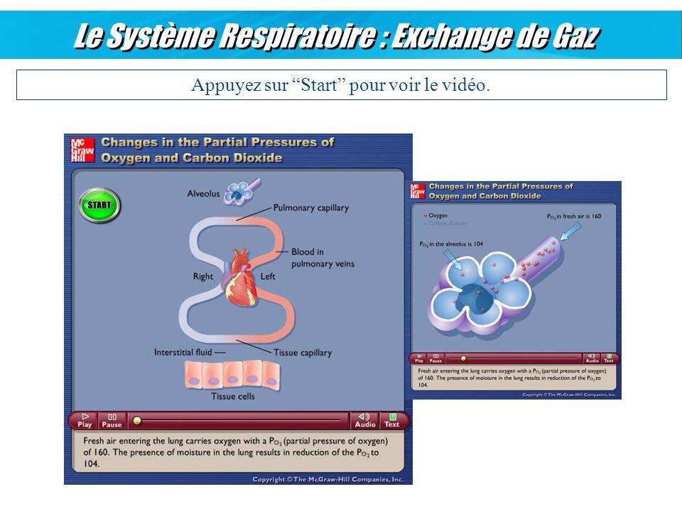 Le Système Respiratoire : Exchange de Gaz
