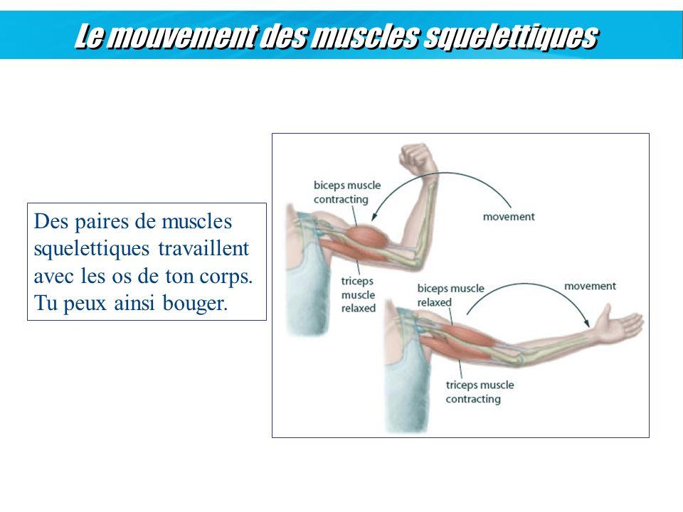 Le mouvement des muscles squelettiques