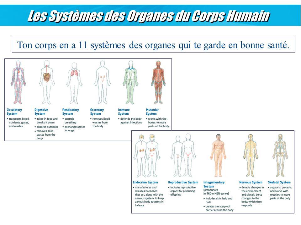 Les Systèmes des Organes du Corps Humain